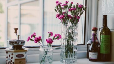 Jakie rośliny oczyszczają powietrze w domu?