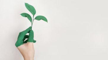Audyt środowiskowy w firmie