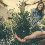 Jak i kiedy wykorzystywać kratki trawnikowe?