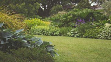 Susza w ogrodzie