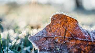 Ogród i zima